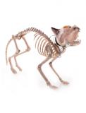 Skelett einer Katze mit Licht und Sound